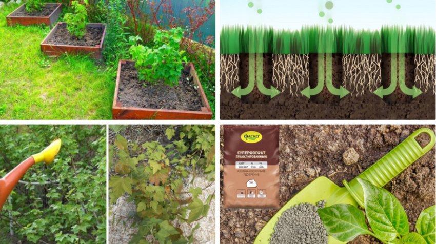 Требования по агротехнике