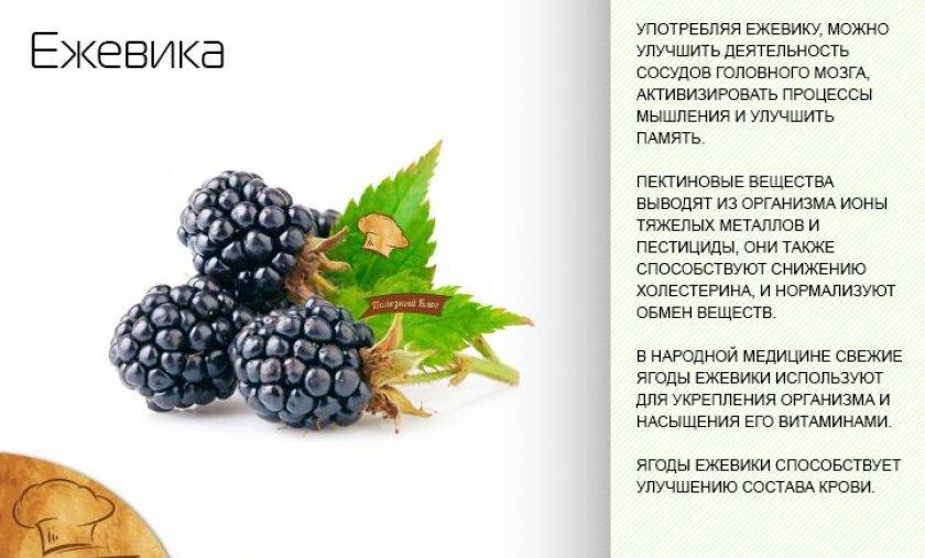 Лечебные свойства ежевики
