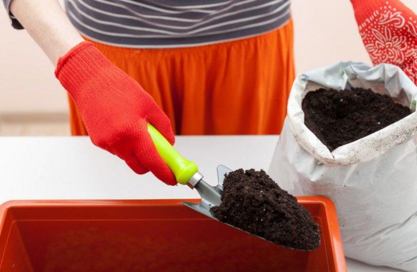 Почва для выращивания томатов