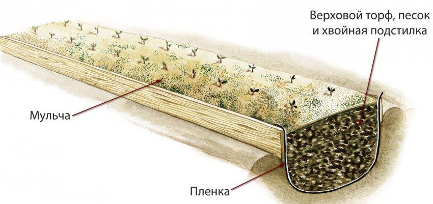 Траншея для брусники