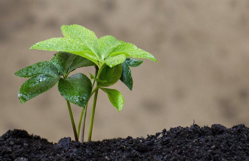 В США раскрыли секрет почвенного «иммунитета»