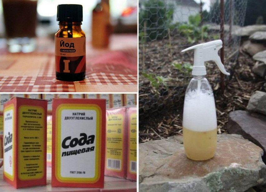 Опрыскивание растворам соды и йода