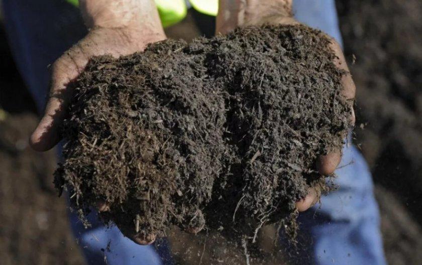 Почва для посадки жимолости