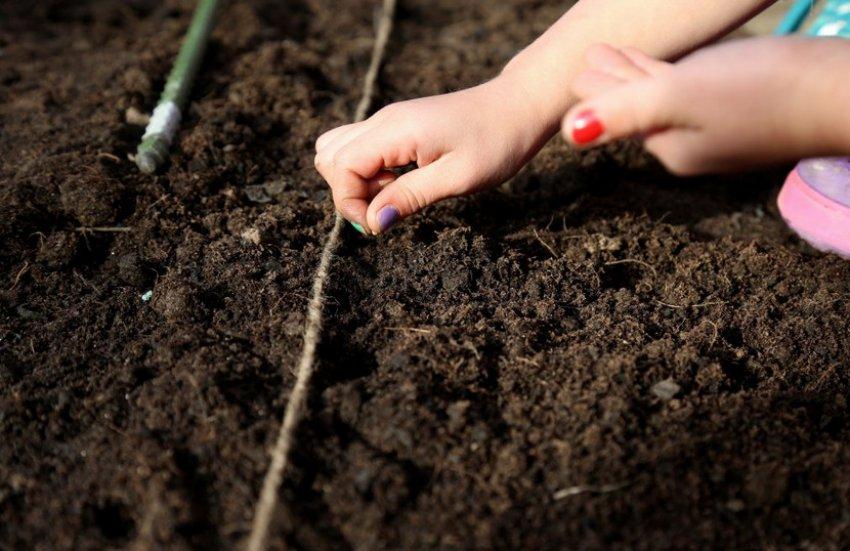 Посев в открытий грунт