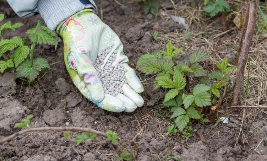 Подкормка кустов осенью