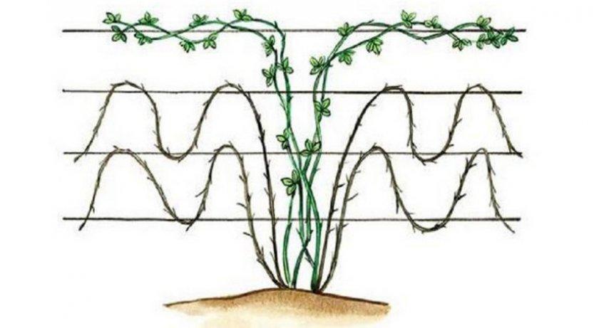 Волновая подвязка