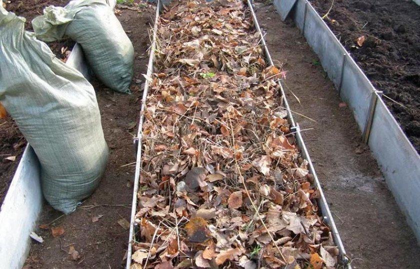 Укрытие чеснока листьями