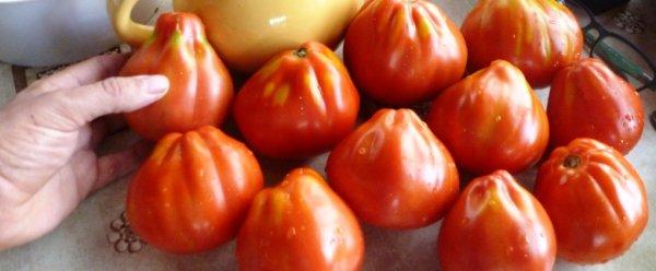 Томат Сердце Буйвола: урожайность, характеристика и описание сортас фото