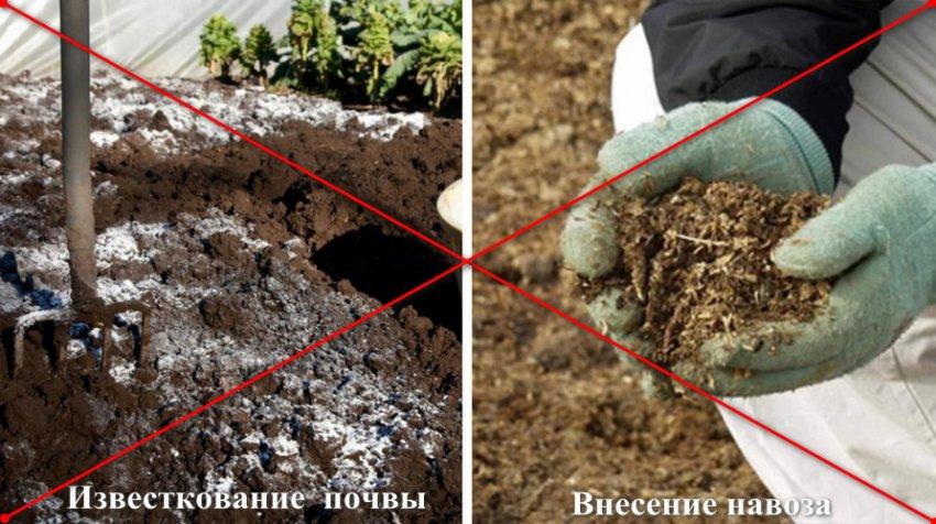 Непригодные добавки для почвы