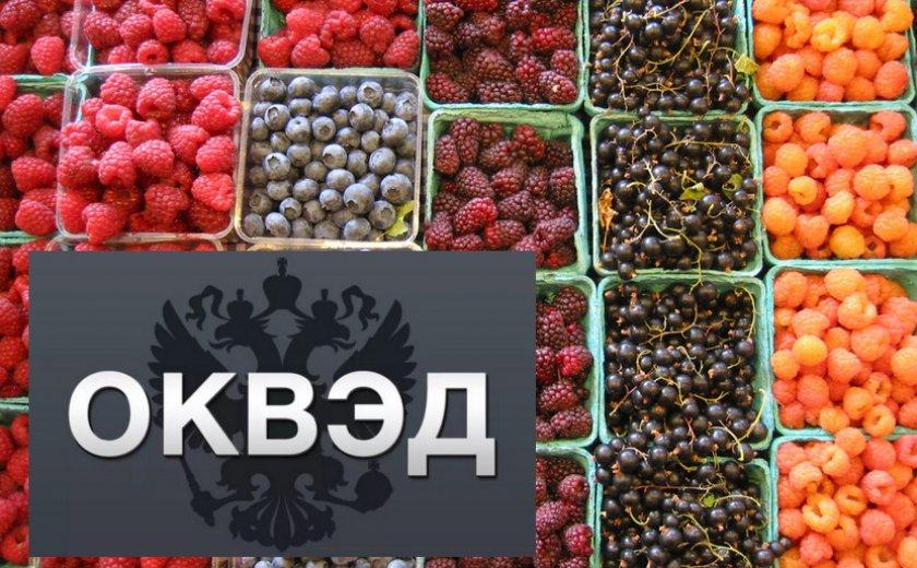 ОКВЕД на выращивание ягодных культур
