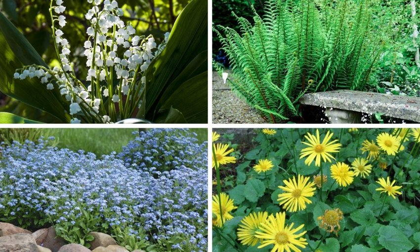 Хорошие растения-соседи для жимолости