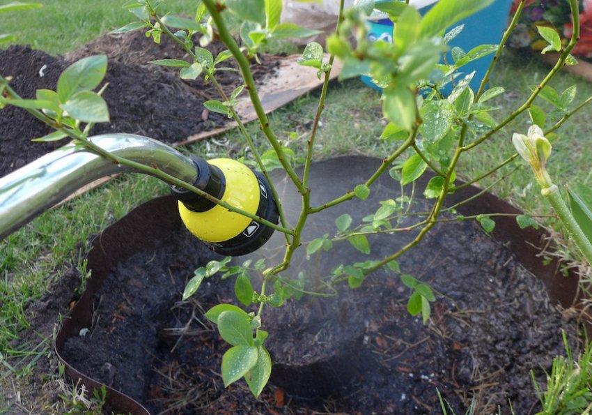 электролит для полива голубики
