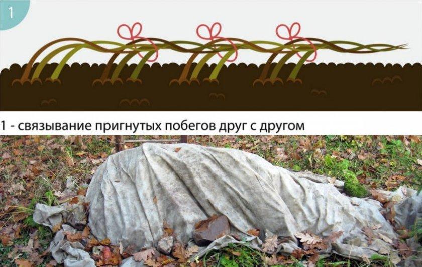 Пригибание и укрытие кустарника