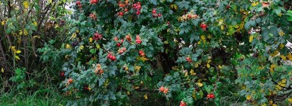 Чем полить дерево, чтобы оно засохло: список средств и методов