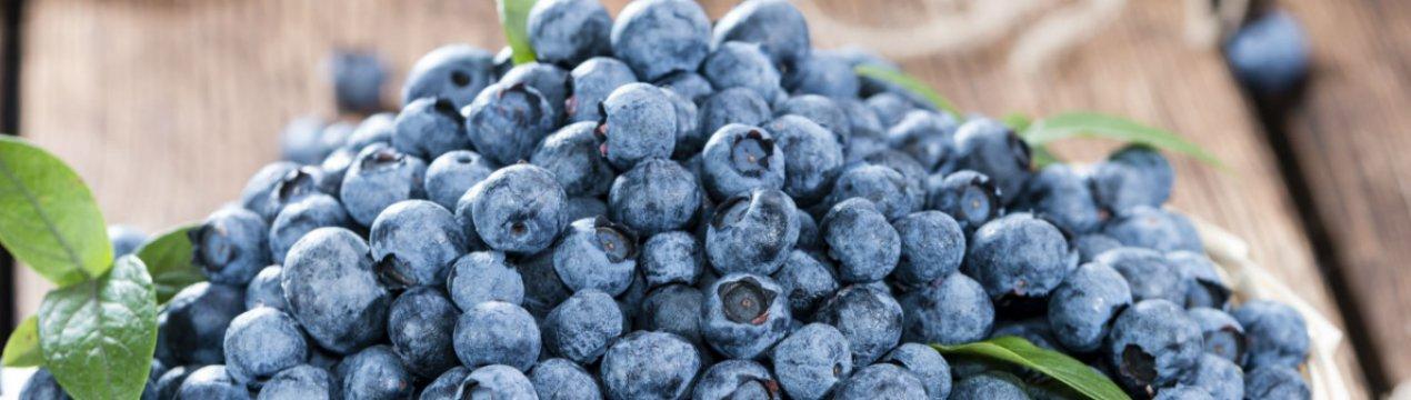Голубика — целебная ягода при сахарном диабете