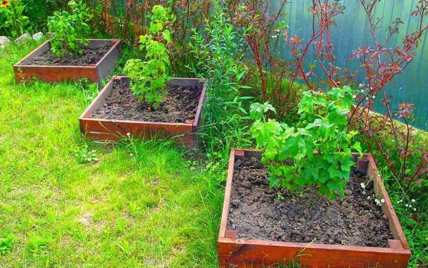Солнечное место для посадки смородины