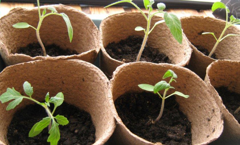 Емкость для выращивания