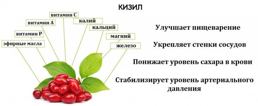 Витаминный состав и польза кизила