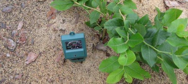Чем подкислять почву для голубики?