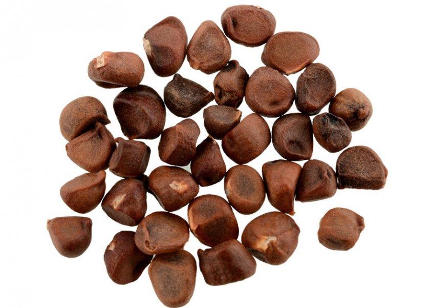 Семена голубики