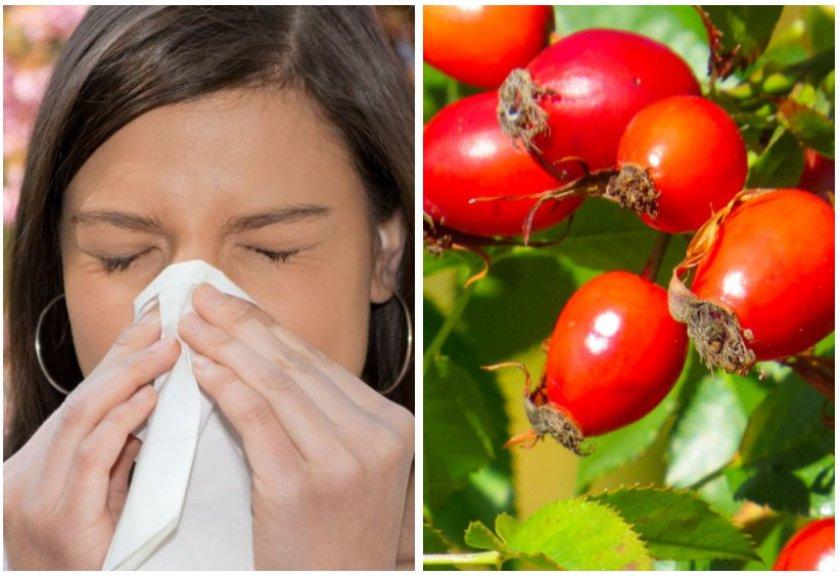 Шиповник против алергенов