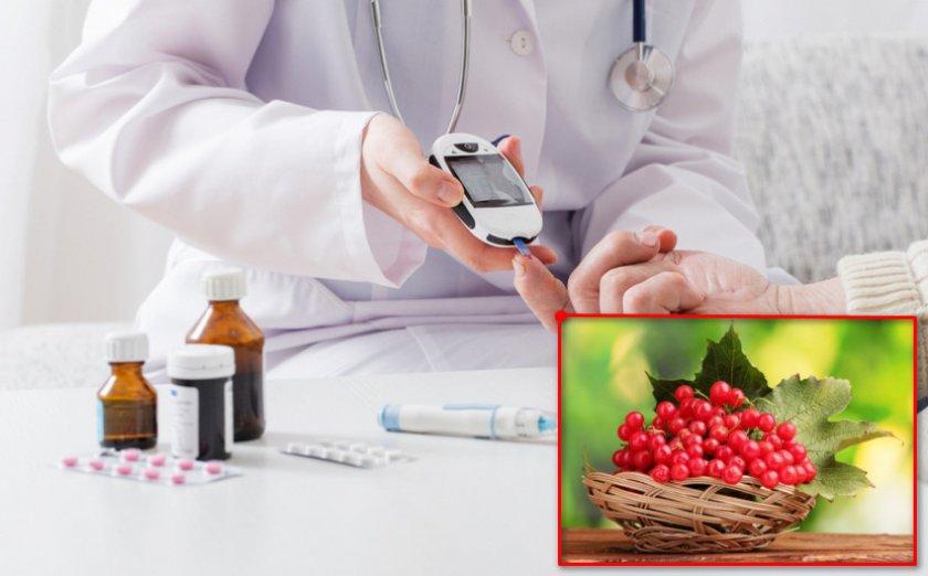 Калина при диабете