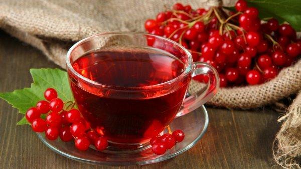 Польза и вред ягоды калины для здоровья. Лечебные свойства