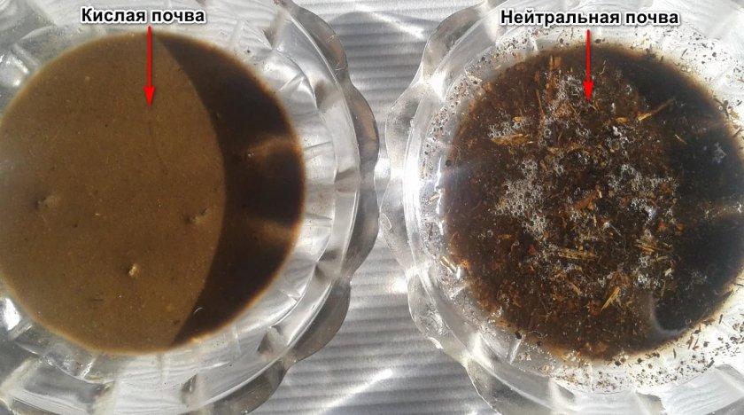 Определение кислотности грунта уксусом