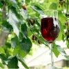 Рецепт вина из шелковицы
