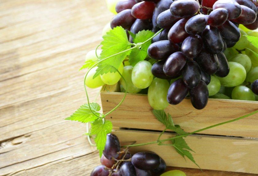 Жара, воробьи и дрозды усложняют жизнь украинскому винограду