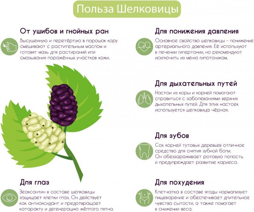 Польза шелковицы