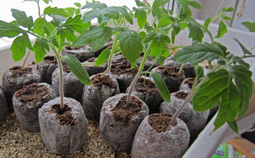 Емкость для выращивания томатов