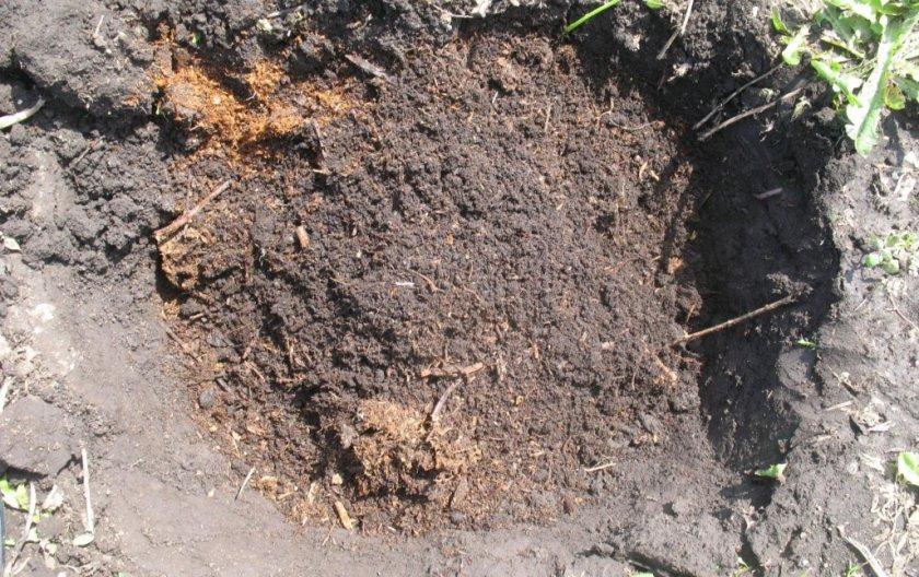 Посадочная яма для ореха