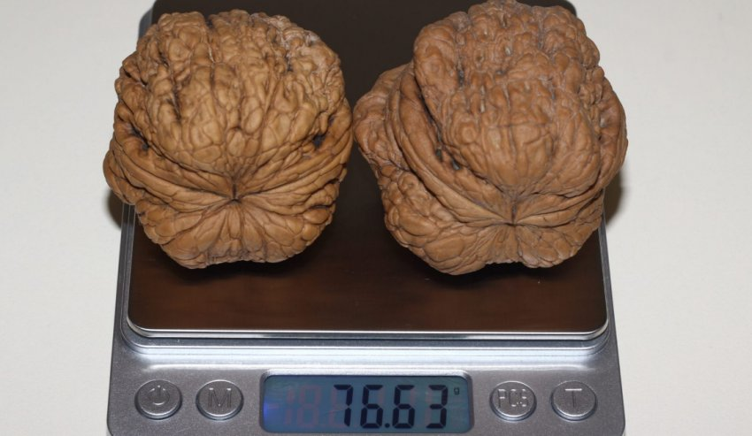 Вес грецкого ореха