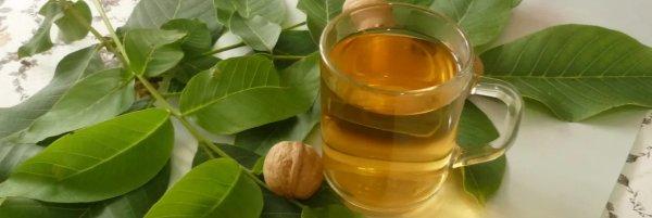 Чай из листьев грецкого ореха: польза и вред, как правильно ферментировать