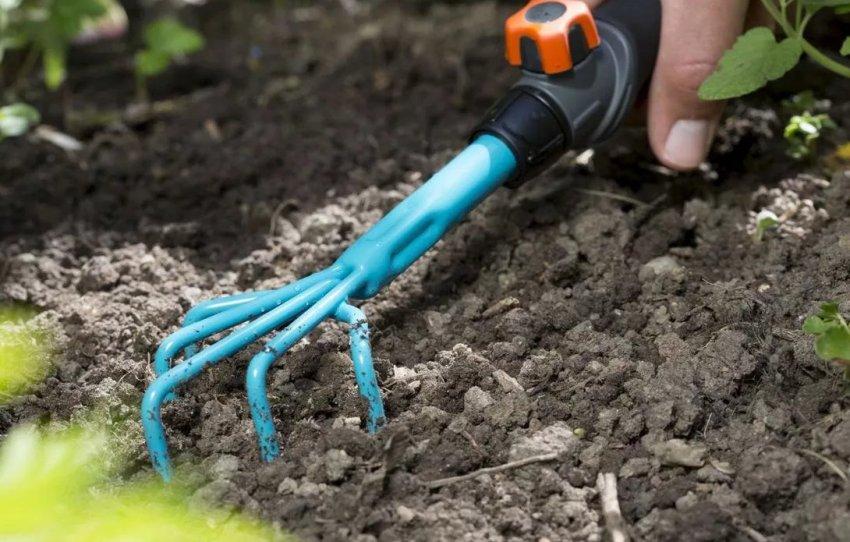Рыхление почвы ореха