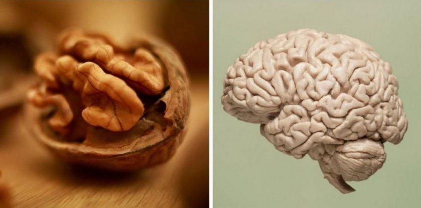 Орех для улучшения работы мозга