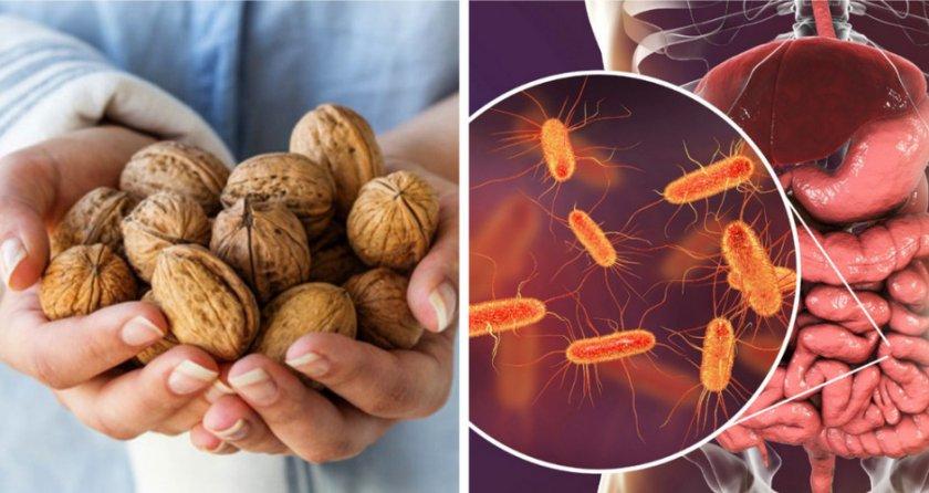 Орех для нормализации микрофлоры кишечника