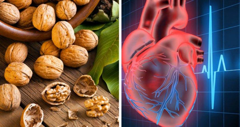 Орех для улучшения работы сердечно-сосудистой системы