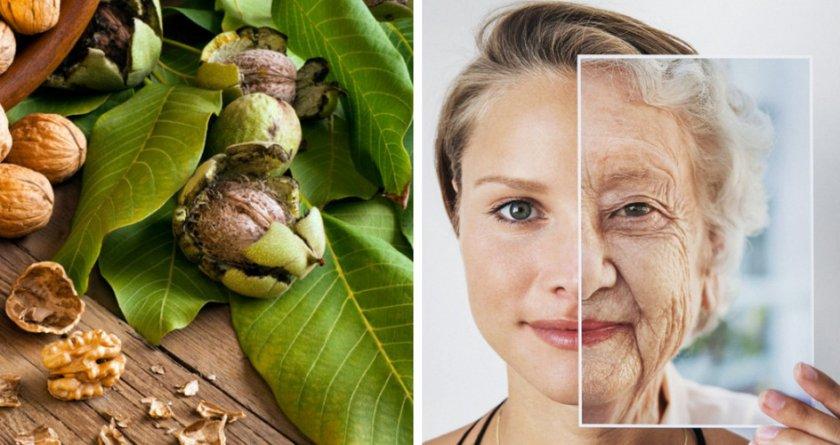 Грецкий орех для замедления старения