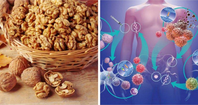 Грецкий орех при онкологии