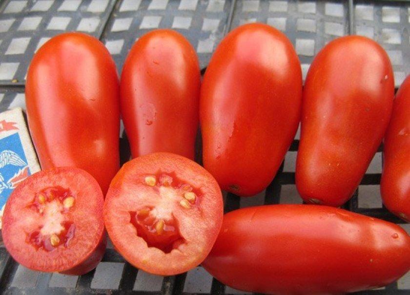 Урожай томата Французский гроздевой