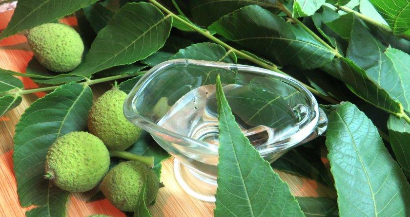листья черного ореха применение