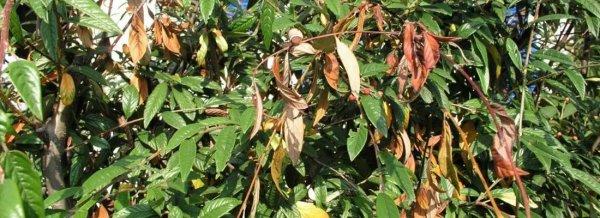 Чем опрыскивать яблони ранней весной от вредителей. Поэтапная обработка яблонь от вредителей и болезней весной. Советы профессионалов. Обработка яблонь весной