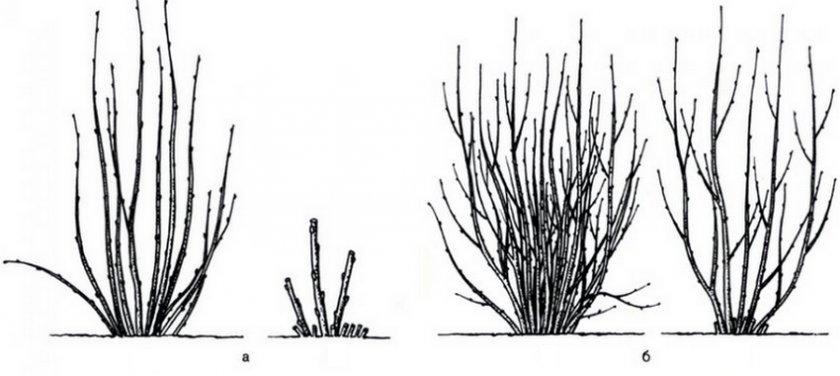 Обрезка в форме кустарника