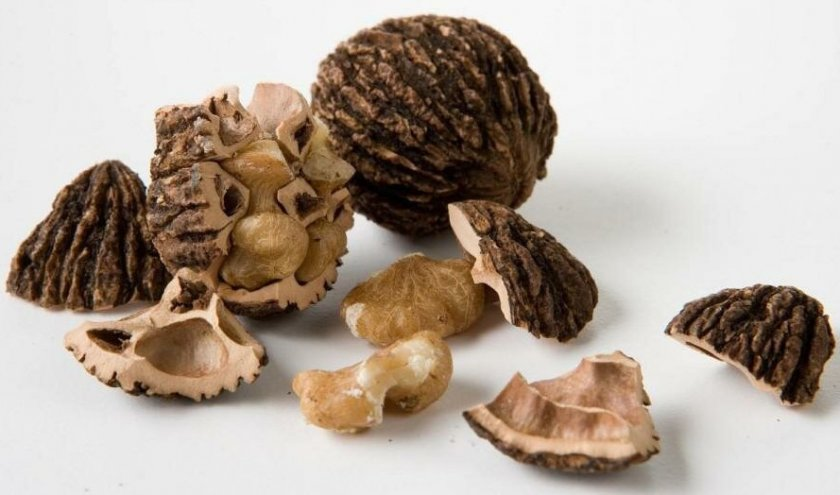 Плоды чёрного ореха