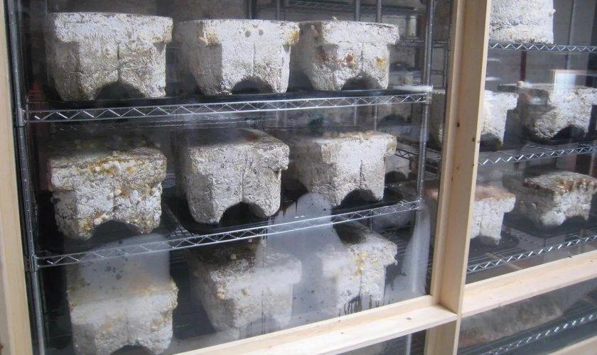 Выращивание полевых шампиньонов в брекетах