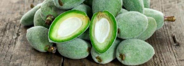 Как правильно есть свежий миндаль: со шкуркой или без, польза и вред орехов