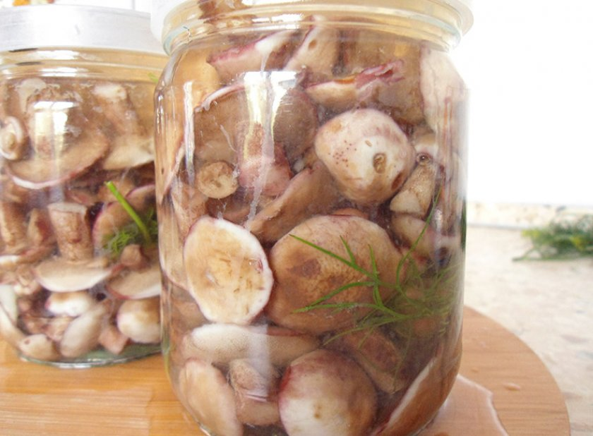 маринование маслят на зиму рецепт без стерилизации