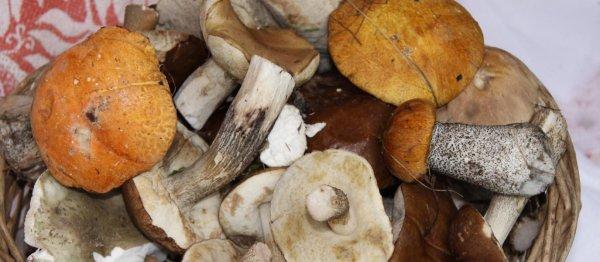 Сколько по времени варить грибы подосиновики и подберёзовики, перед жаркой и для супа
